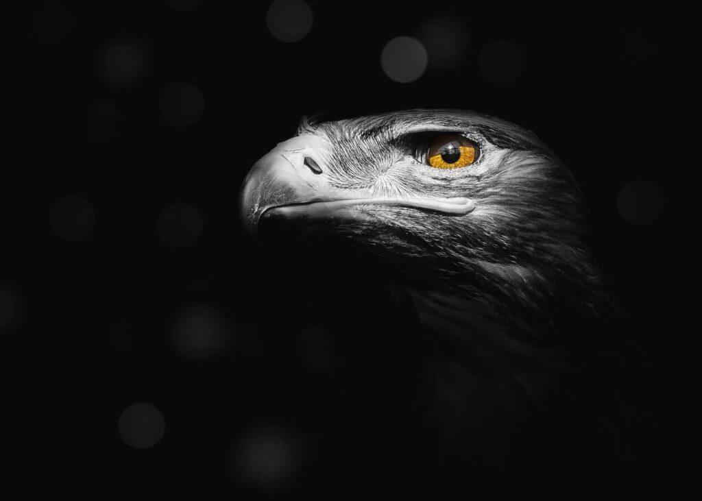 eagle-mental-lechamandigital
